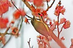 """湖北宜昌一公园现稀有""""亚洲蜂鸟"""""""