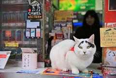 """日本八字眉囧猫走红 成召唤幸福""""使者"""""""