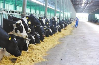 养殖业有力促进农民增收