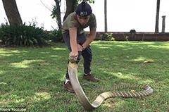 男孩印尼丛林大胆抚摸眼睛王蛇脑袋