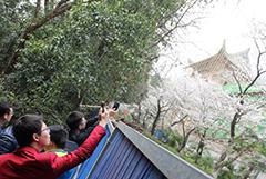 武汉大学主要赏樱区域被封 游客隔着围栏赏樱花