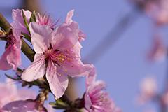 春分来了去看花 这些果实的花朵绝对让你惊艳