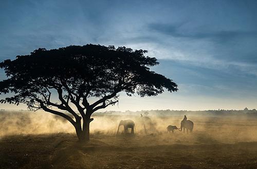 最后的训象者:泰少数民族视大象如家人