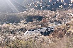 开往春天的列车被摄影发烧友逼停 山路封闭