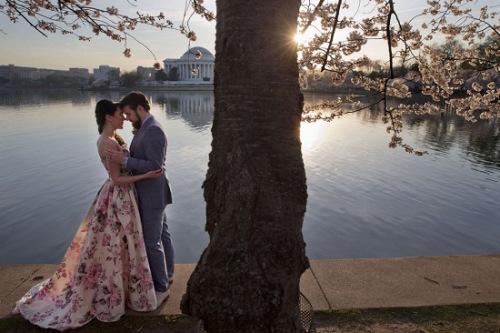 美景惹得游人醉:美国华盛顿樱花盛开(组图)