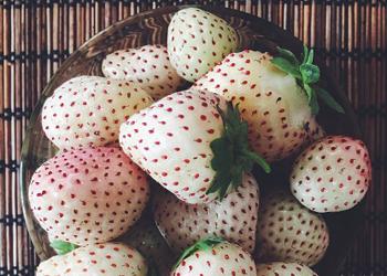 新型草莓澳大利亚上市:雪白果肉 红色种子(组图)