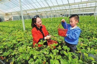 阳春三月 天水森泰草莓园内游客络绎不绝(图)