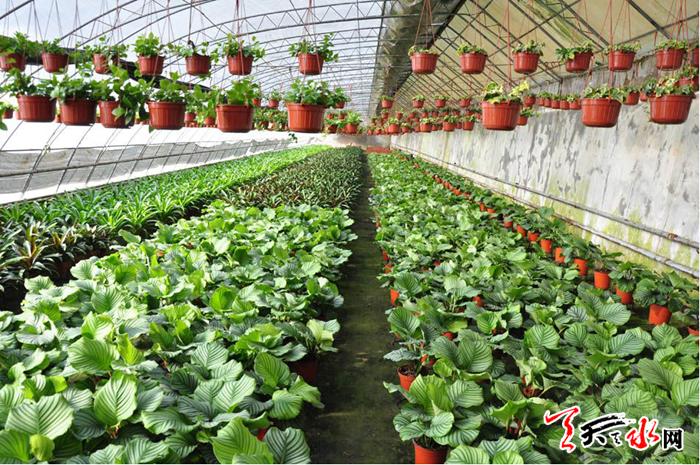 天水引进农作物新品种逾两千个 农业科技创新成效显著