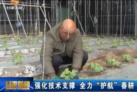 """甘肃:强化技术支撑 全力""""护航""""春耕"""