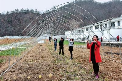 陇南康县安家坝村党支部书记和村民一起搭建蔬菜大棚