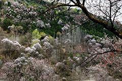 天水清水:三台寺峡山花绽放 漫山遍野如烟似霜(组图)