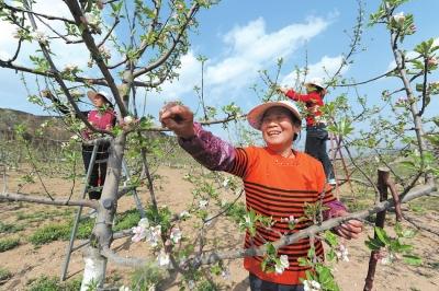 天水麦积区林果技术人员指导农户进行疏花疏果(图)