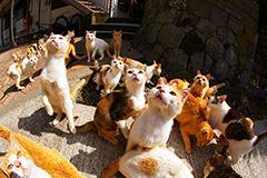 猫岛: 猫咪数量是人类6倍