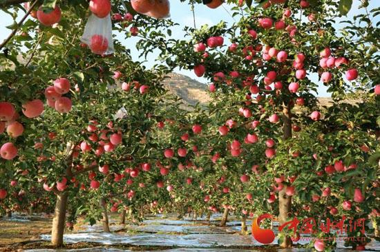 苹果花束包装步骤图解