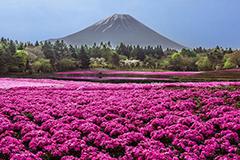 日滨海公园成花的海洋