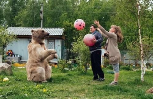"""俄夫妇养了一个""""熊孩子"""" 一家三口幸福温馨(图)"""