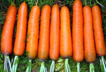 金昌特产——红萝卜