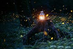 南京最美萤火虫季