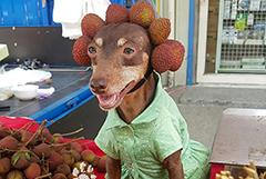 台湾萌犬卖水果