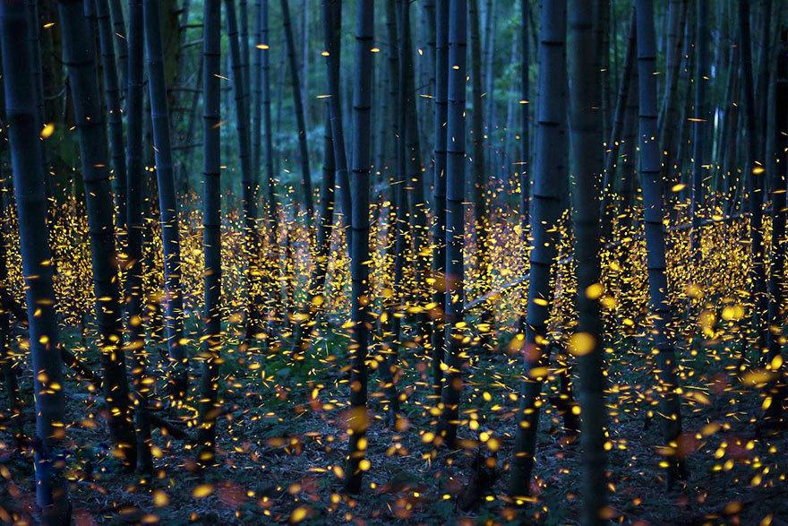 动画中的奇幻美景 日本现真实版萤火虫之森(图)