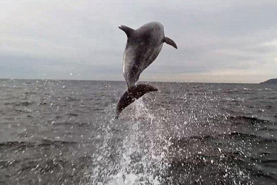巴西海豚绕船而行跳出水面似表演(组图)