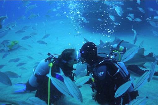 """美国一对情侣海中订婚 鲨鱼做""""见证人""""(图)"""
