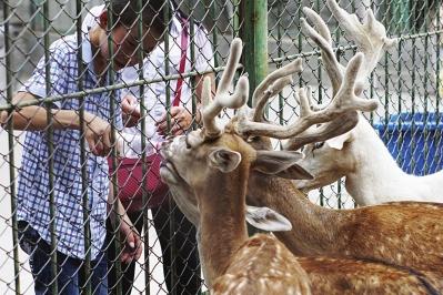 兰州市动物园里的小动物们这样消暑