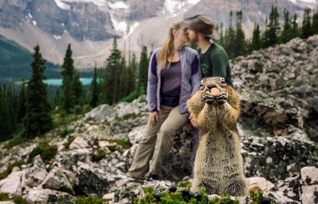 加拿大情侣公园拍订婚照遭顽皮松鼠抢镜(图)