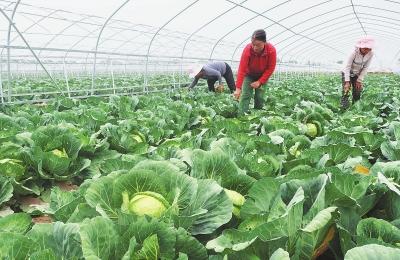 临夏县建成百益北塬现代农业科技园蔬菜种植基地