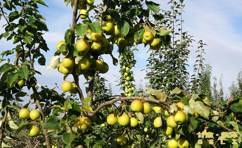 化农业产业结构重要举措