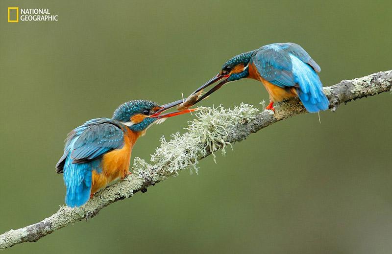 《国家地理》自然摄影赛聚焦最美自然(组图)