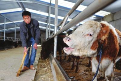兰州:以双联扶贫为有效载体 补齐农业农村五块短板 助推城乡同步建成全面小康