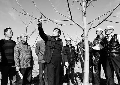 临夏积石山县大力投入核桃品种改良及基地建设工程