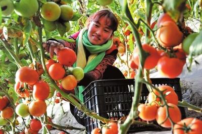 甘州区着力推动蔬菜生产健康发展