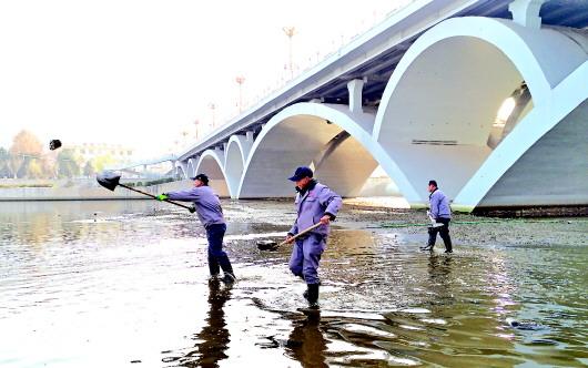 天水湖管理处工作人员双桥藉河大桥下清理河道石块(图)