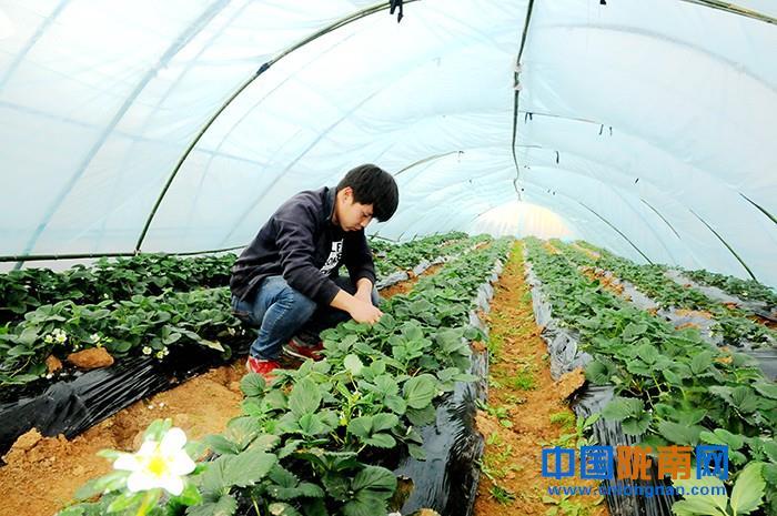 陇南徽县鼓励引导农户大力发展休闲观光农业(图)