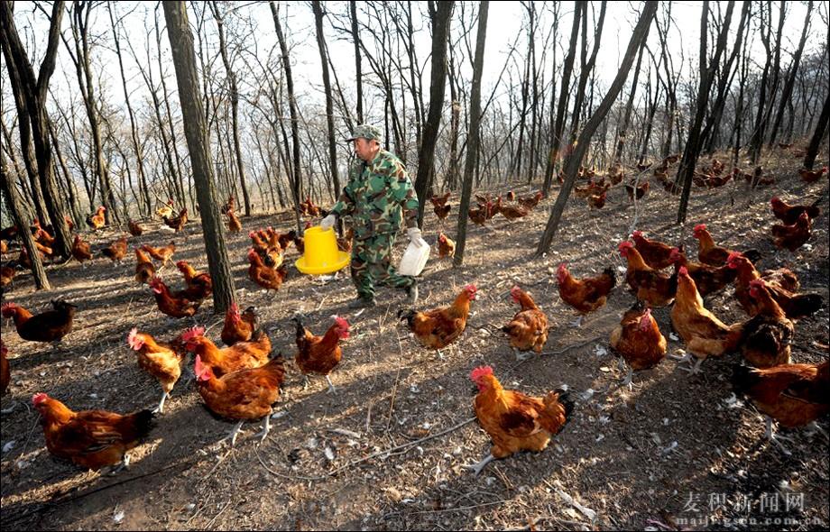 """天水麦积区:林业扶贫在""""保生态""""中""""促增收""""(组图)"""