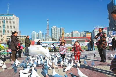 兰州天气晴朗 市民在东方红广场喂鸽休闲(图)