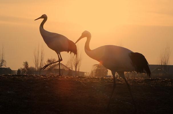 张掖:鹤舞湿地迎新年