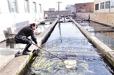 兰州永登县水产养殖 鲑鳟肥农家欢(图)