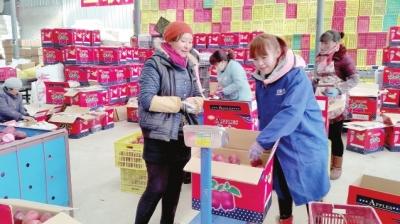 陇南礼县苹果销售迎来旺季(图)