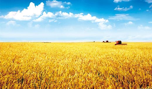 《今日聚焦-甘肃》 农业供给侧 甘肃怎么改