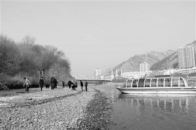 兰州黄河段越冬候鸟不愁吃