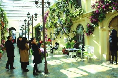 金昌花文化博览馆大型玫瑰展开幕在即(图)