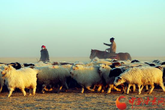 酒泉阿克塞县草原牧区开始迎接小羊羔诞生(图)