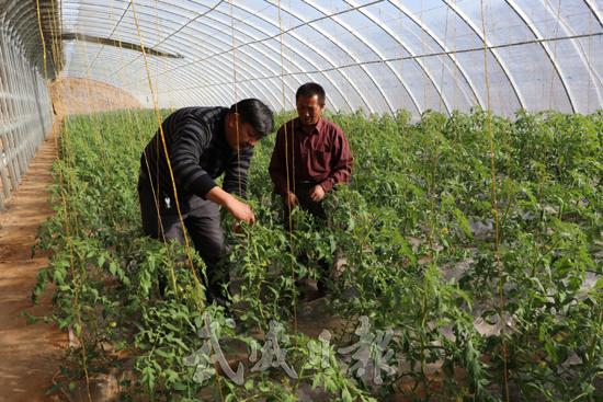武威古浪县在移民区开展一系列跟踪式农业技术服务(图)