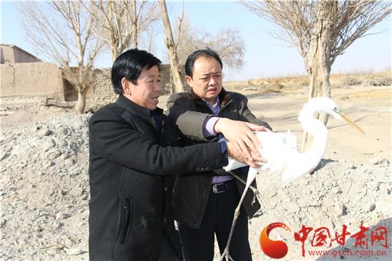 """张掖官员考察黑河 救助疑似国家二级保护动物""""白鹭""""(图)"""