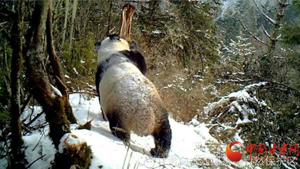 陇拍客|《阴平古道》纪录片摄制组走进白水江自然保护区野外巡护监测