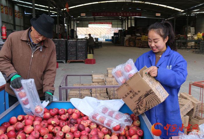 陇南礼县苹果销往30多个国家和地区