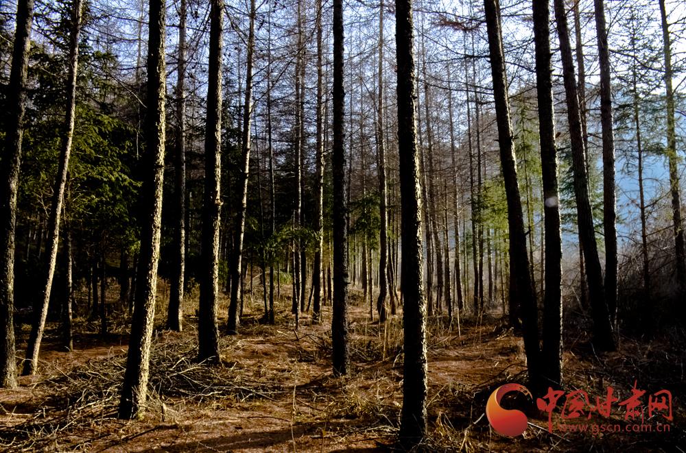 陇拍客|融雪成溪 小麦破土——渭河源独特的冬春交融图【组图】
